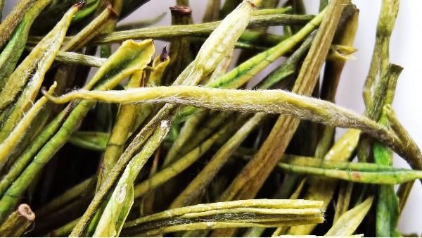 黄金茶的氨基酸含量?对茶叶有什么作用?【鸦鹊山】