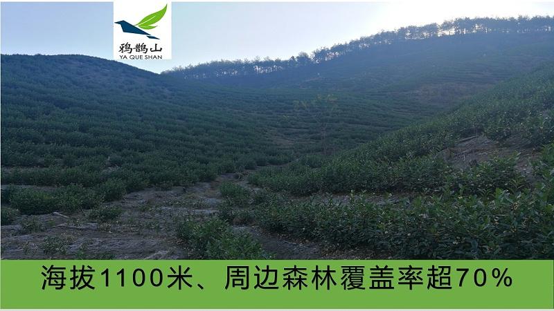 海拔1100米