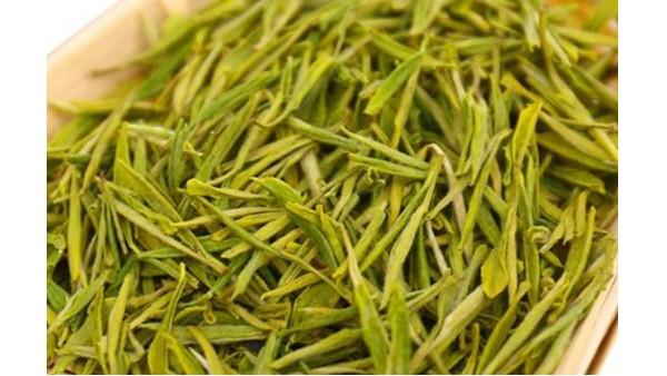 安吉黄金茶香吗?喝清明前的茶叶,是真的香!【鸦鹊山】