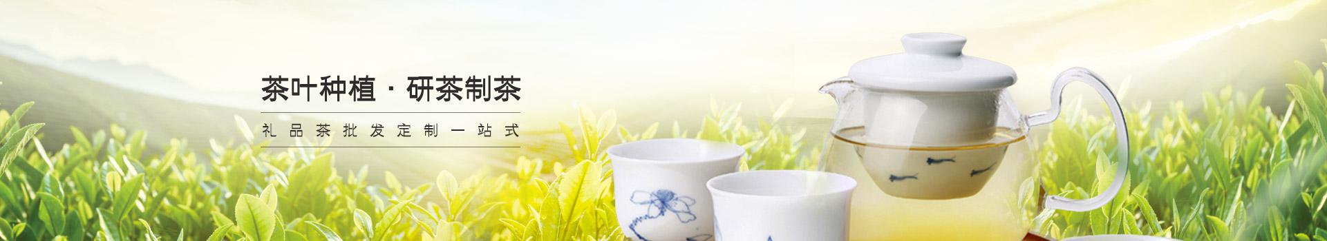 鸦鹊山茶叶种植 · 研茶制茶 礼品茶批发定制一站式