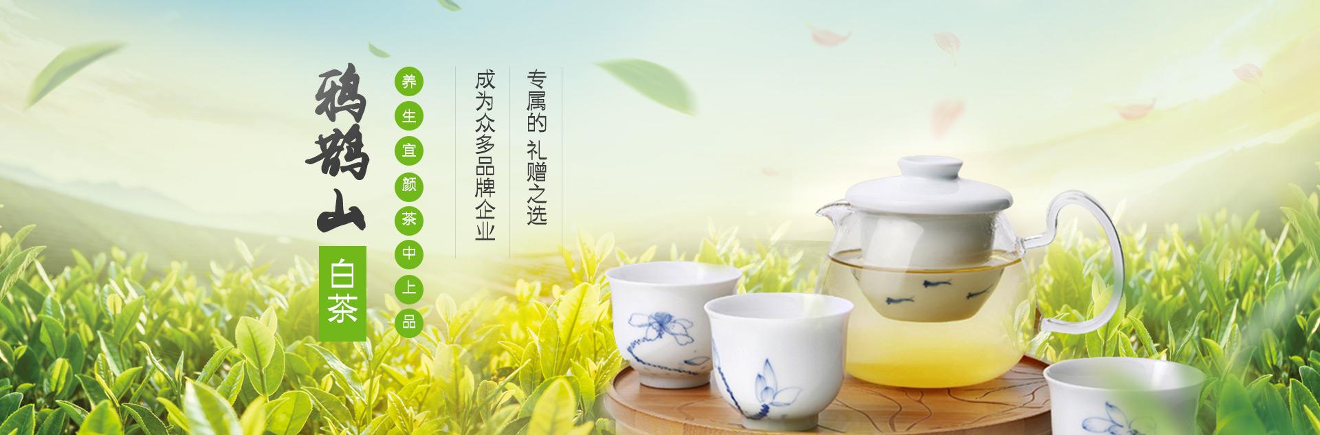 鸦鹊山白茶  养生宜颜茶中上品 成为众多品牌企业专属的 礼赠之选