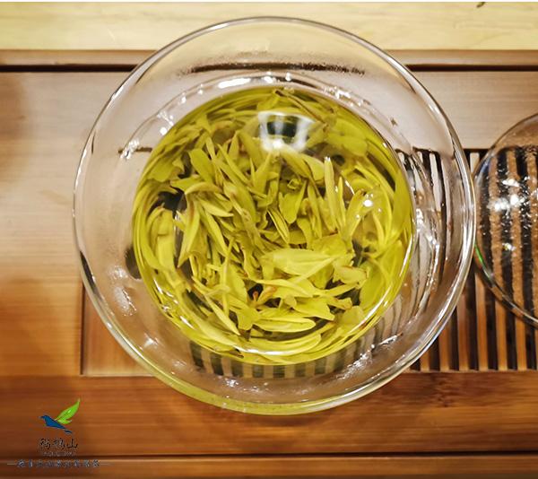 黄金叶茶的口感如何?口味清淡,不适合老茶客【鸦鹊山】