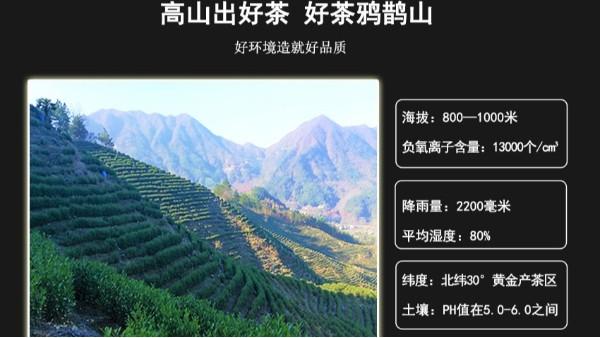 高品质礼盒装茶叶,【鸦鹊山】兼具颜值和品质!
