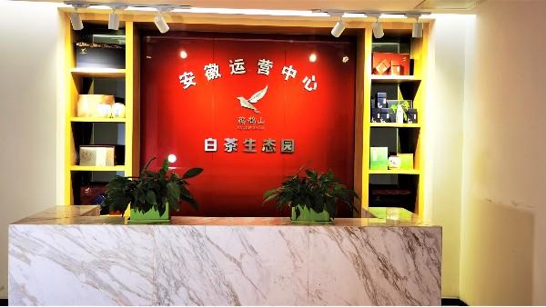 合肥茶厂直销!安吉白茶品种高山产区种植品质好!【鸦鹊山】
