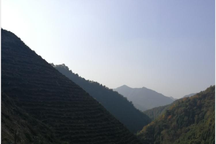 高山茶为什么好,哪些因素影响了它?