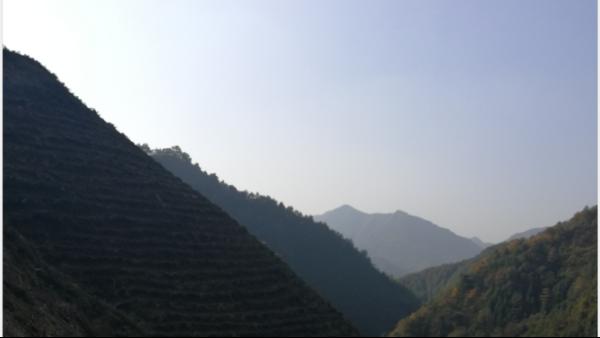 高山茶为什么好,哪些因素影响了它?【鸦鹊山】