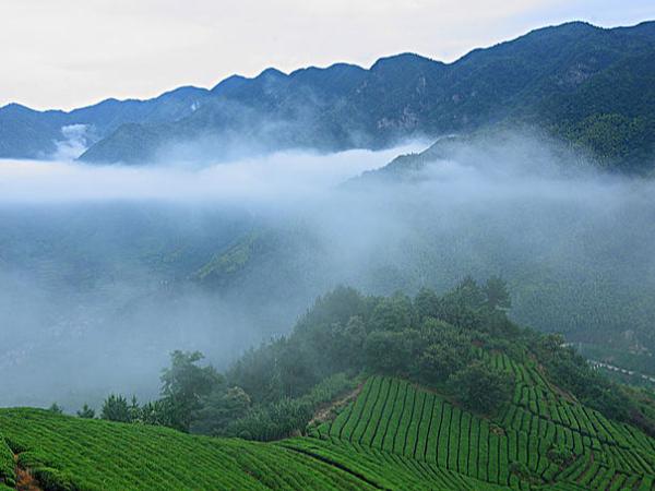 台湾高山茶哪种好?五种典型的高山茶!【鸦鹊山】