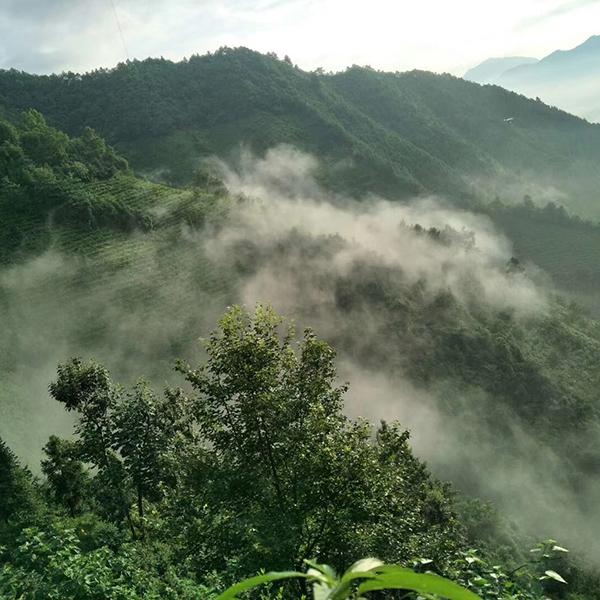 1126鸦鹊山2