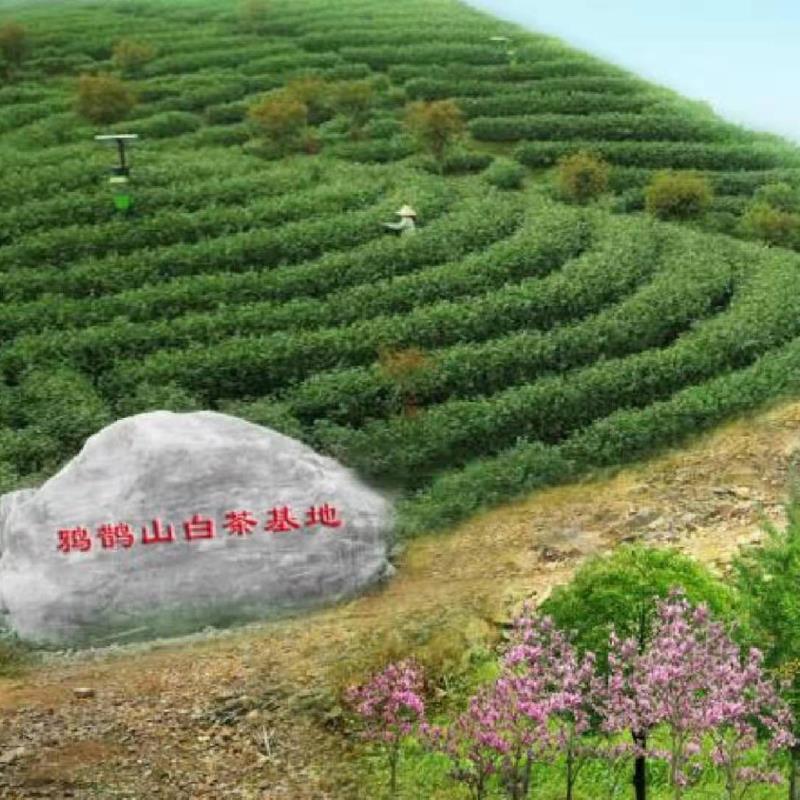 茶叶礼盒送人怎么选 记住这三点就行了【鸦鹊山】