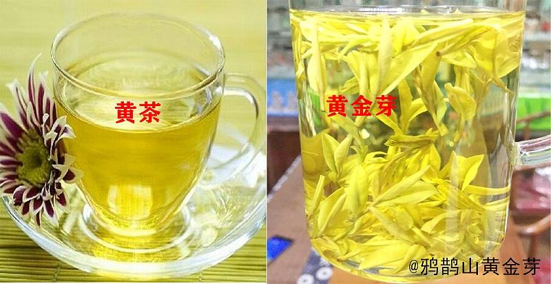 安吉黄金芽是黄茶吗?二者存在本质区别!【鸦鹊山】