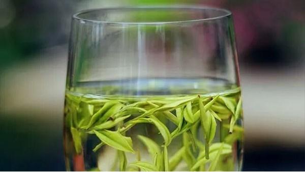 为什么要喝高山茶?天然保健 当然要喝!【鸦鹊山】