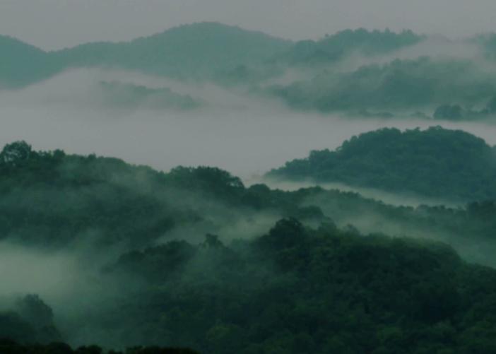 台湾高山茶香气特征?为什么茶叶香气各不同?【鸦鹊山】