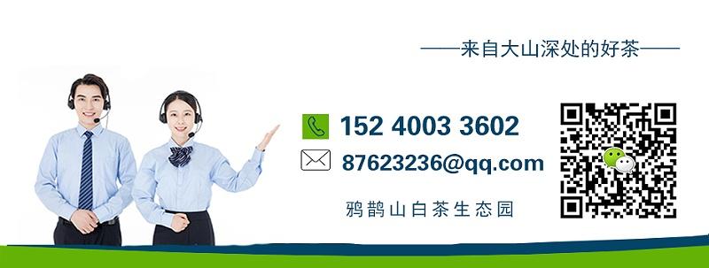茶叶礼品批发厂家,市场营销地推礼品精选【鸦鹊山】