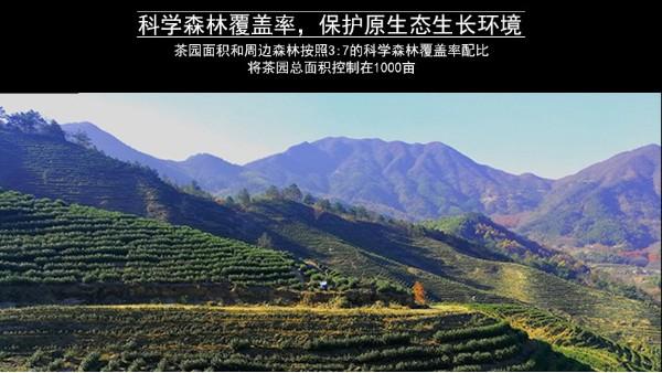 高山茶的营养物质?喝茶是最划算的养生方式!【鸦鹊山】