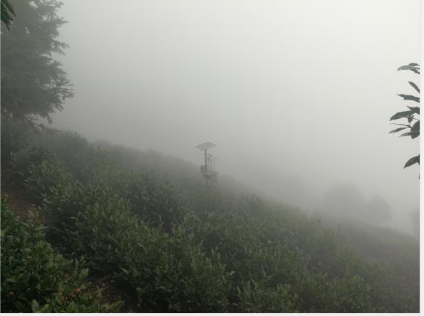云雾茶产自哪里,云雾茶好喝吗?