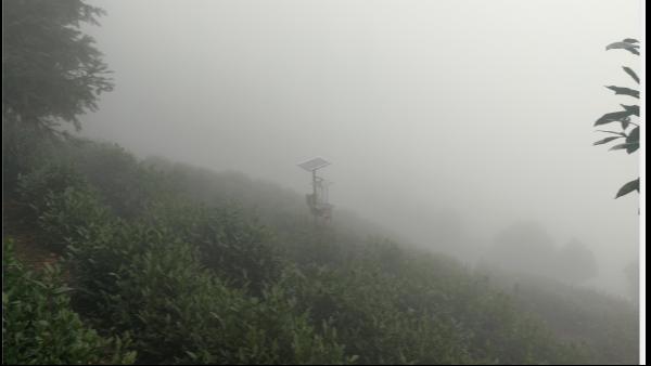 云雾茶产自哪里,云雾茶好喝吗?【鸦鹊山】