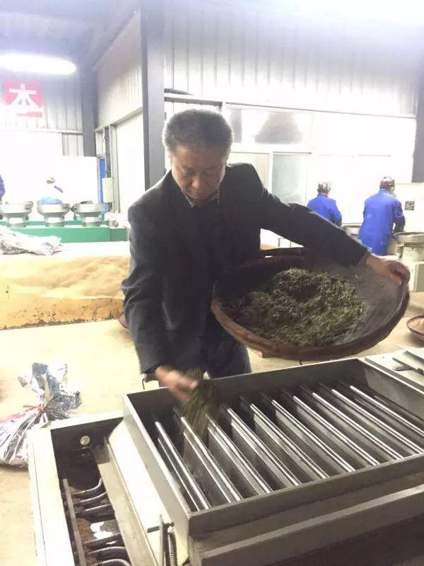 包小村保靖黄金茶:一个为保靖黄金茶奉献了一生的男人【鸦鹊山】