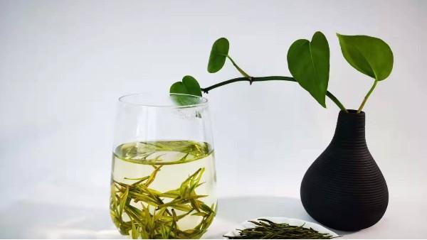 云雾茶应在啥季节喝?喝对绿茶才养生!【鸦鹊山】